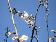 白い花に、背景は青空