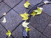 12月15日の東京は午後から弱い雨